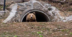 Bear Sanctuary - Pirin Mountains, Bulgaria
