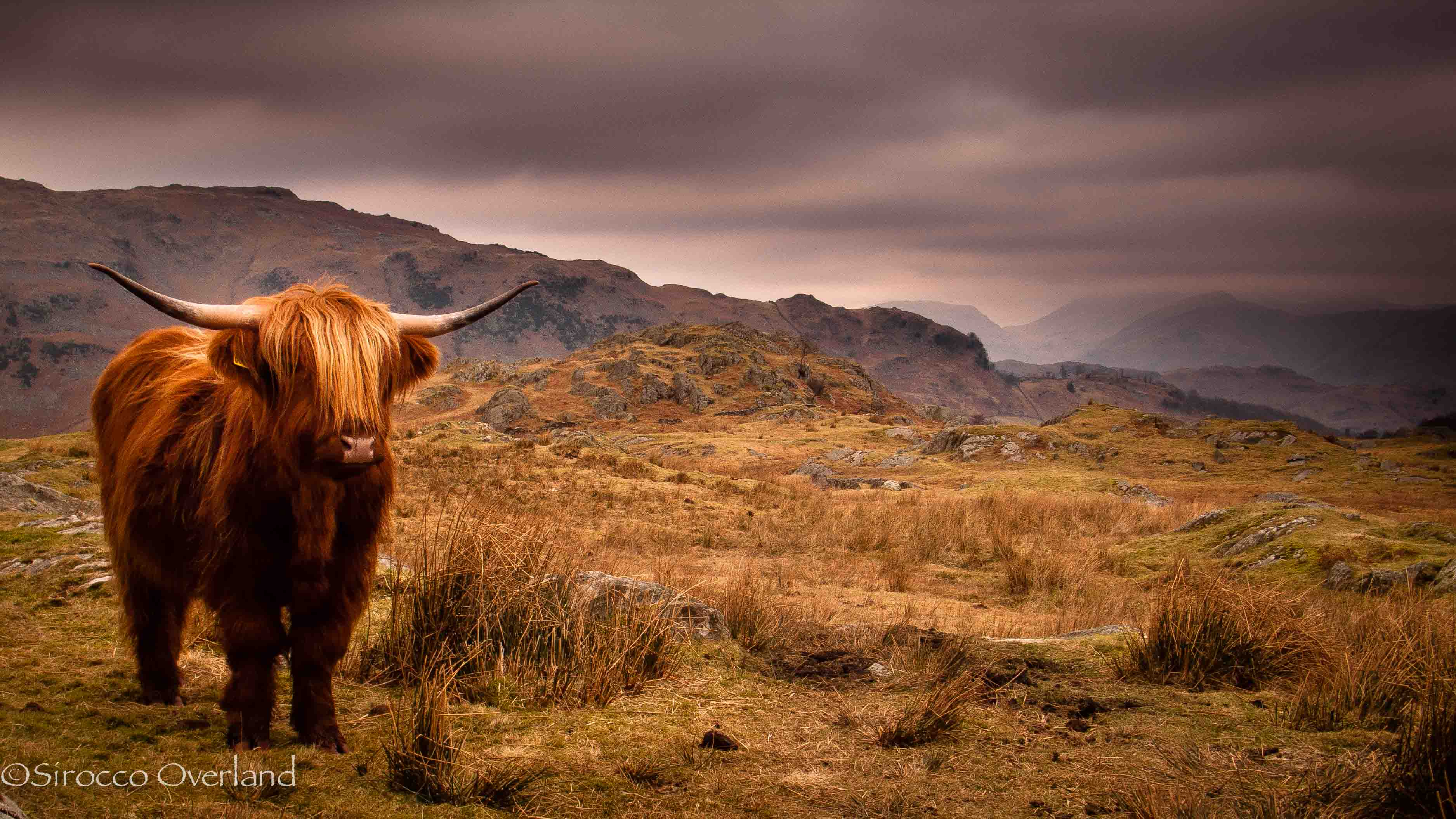 photo of the week highland cattle u2013 lake district england 2012