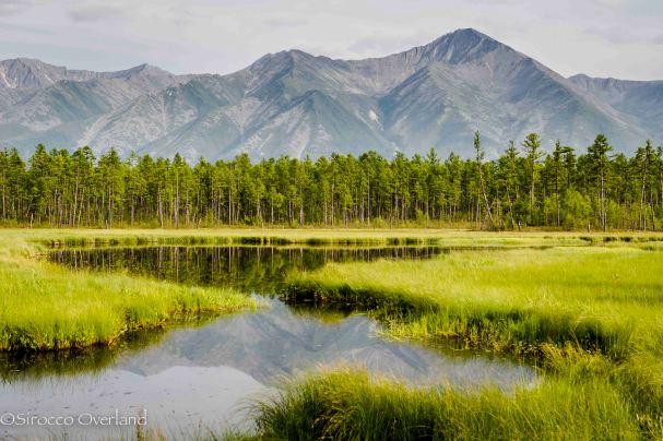 BAM Landscape